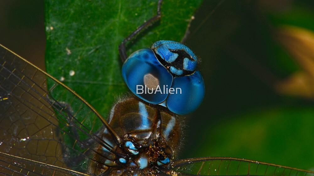 Wings Of Glass by BluAlien