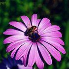 Busy Bee by Zoe Harris