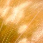golden grass by AmeliaMG