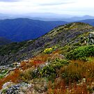 Summer at Mount Buller Victoria by Janette Rodgers