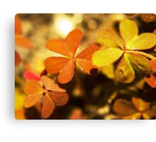 Clover in Macro Canvas Print