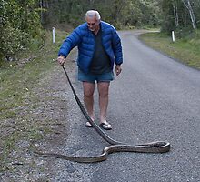 Amythesistine Python at Paluma.  Removing it from the road by Alwyn Simple