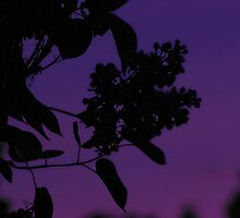 And So The Little Lilac Fell Into A Peaceful Sleep As Night Tenderly Embraced The World In Deep Purple  by ArtOfE