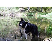Indy in the pond Photographic Print
