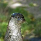 Otter by Vac1
