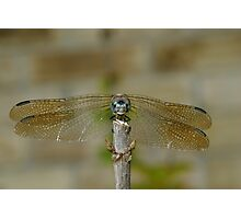 Dragonfly Head-on Photographic Print