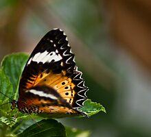 Madam Butterfly~~~Got Featured Work by Kornrawiee