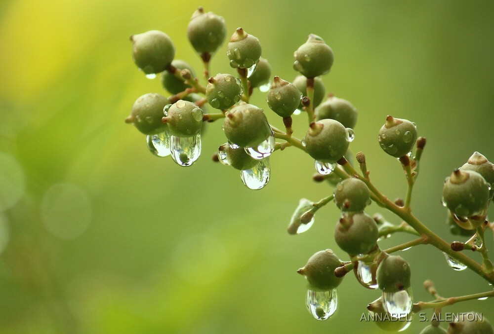 coming from the rain by ANNABEL   S. ALENTON