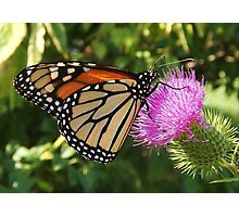 The Monarch Photographic Print