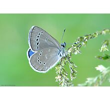 Silvery Blue  Photographic Print
