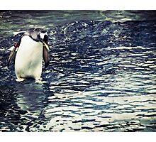 Contemplating Penguin Photographic Print