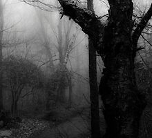 Eerie Stillness by Joseph Noonan Photography