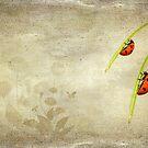 LadyBirds by Svetlana Sewell