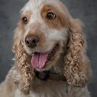 Cocker Spaniel  by Mark Cooper
