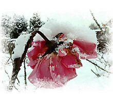 The Last Rose Photographic Print