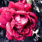 Rose and Rain #3 by Konoko479