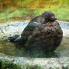 Taking a dip! by Jean Turner