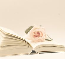 Book and Rose  by Andreka