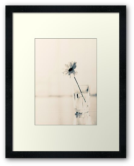 One Flower on Beige Background  by Andreka