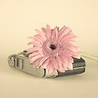 Pink Flower and Camera  by Andreka