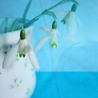 Snowdrops by Jean Turner