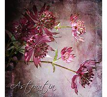 Astrantia Photographic Print