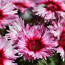 Flowers by TheaShutterbug