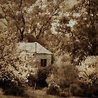 Spring Cottage  by binjy