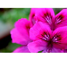 Vibrancy in a Macro Photographic Print