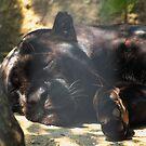 black cat... by Cheryl Dunning