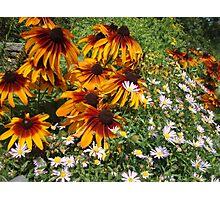 Orange Flowers Photographic Print