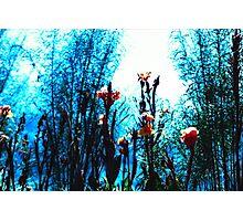 Verdes, azules, naranjas. Photographic Print