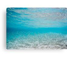 Fish shoal, Coogee, Australia Canvas Print