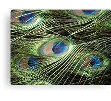 Peacock Feathers Close Up Canvas Print
