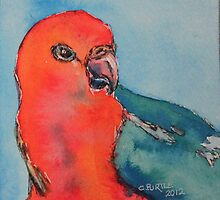 King Parrot by christine purtle