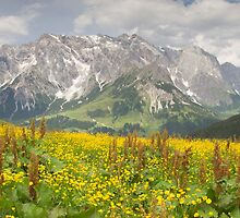 Alpine Panorama by Walter Quirtmair