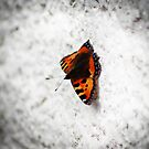 Butterfly by TheCroc1979