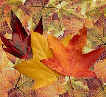 Autumn leaves by Sandra Caven