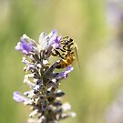 Lavender Honeybee by NatalieCBell