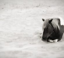 Wild Horses of Assateague by Andrew Vox