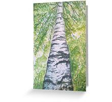 The birch Greeting Card