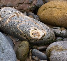rocks at the Pacific coast tideline by David Chesluk