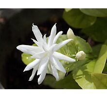 jasmine:) Photographic Print