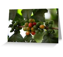 Green Coffee Beans Greeting Card