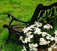PUSHING UP DAISIES~ by RoseMarie747