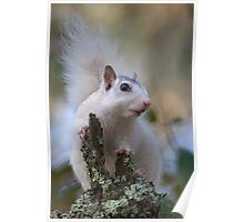 Astronaut Squirrel Poster