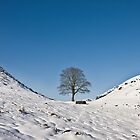 Sycamore Gap in Winter by Joan Thirlaway