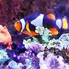 Clownfish and Coral by Susan Savad