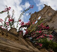 Sky  Blossoms - Pink Bougainvillea at Santa Lucia alla Badia Church in Syracuse, Sicily by Georgia Mizuleva