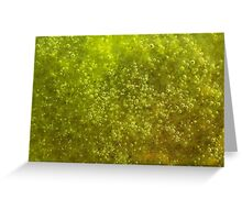 Green algae with air bubbles Greeting Card
